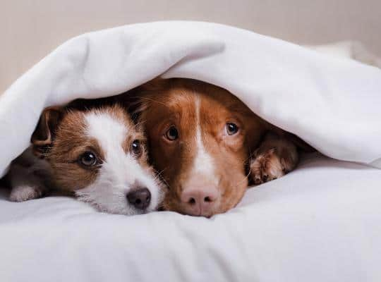 dog-kennel-manufacturer-boarders